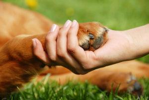 yellow dog paw and human hand shaking friendship