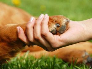 hand-paw-f